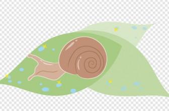 蝸牛 - かたつむり - illustration