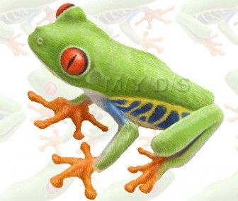 Red-eyed Tree Frog, Agalychnis Callidryas clipart graphics (Free clip art