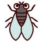 セミ・蝉(カラー)/虫・昆虫の無料イラスト/ミニカット・クリップアート素材