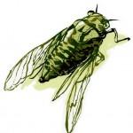 WIP ~ Cicada | Kirsti Wakelin