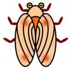 セミのフリー素材。蝉の、幼児や保育園や幼稚園や低学年用かわいい無料イラストです