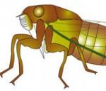[フリーイラスト素材] クリップアート, 蝉 / セミ, 昆虫 / 虫, 動物 / 生き物, SVG ID:201411121600 - GATAG|フリーイラスト素材集