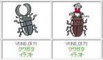 くわがた昆虫イラスト集