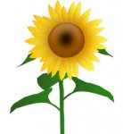 Sunflower Jh clip art Vector clip art - Free vector for free download