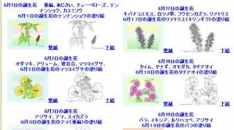 6月の誕生花の塗り絵