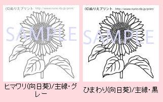 朝顔・向日葵 ぬりえ/無料/夏の花1/花の塗り絵