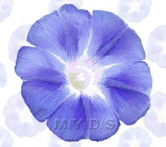 Morning Glory, Ipomoea Nil clipart / Free clip art