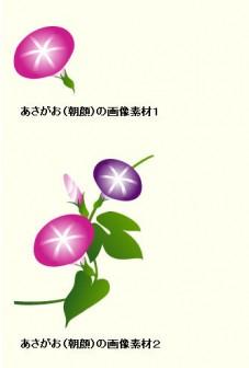 あさがお(朝顔)のイラスト:無料画像の素材屋花子