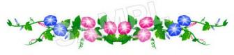 夏の花のイラスト「朝顔」