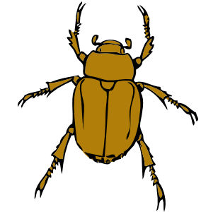 Beetle Bug Clip Art at Clker.com - vector clip art online, royalty free & public domain