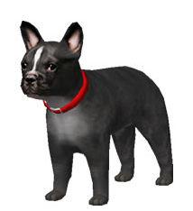 犬の無料イラスト素材 フレンチブルドッグ