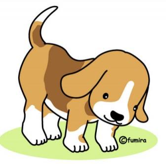 ビーグル犬のイラスト(カラー)