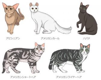 ネコまんまオリジナル 猫イラスト フリーWeb素材配布 / 無添加キャットフード通販 ネコまんま