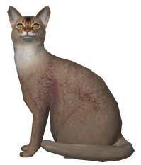 猫(ソマリ)-無料イラスト素材ダウンロード