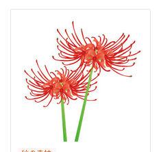 彼岸花 | イラスト素材パラダイスー季節・動物のイラスト素材
