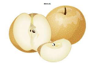 無料素材『季節・行事素材のイラスト市場』秋のイラスト・梨(なし)のイラスト