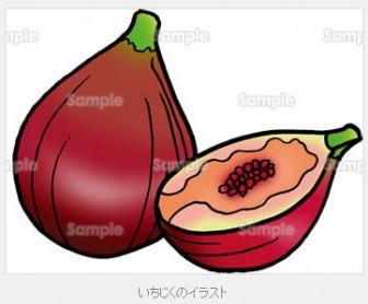 夏至に食べる果物 いちじくのイラスト
