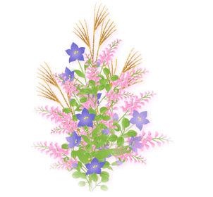 秋の花 秋の七草の無料イラスト素材 - 花/素材/無料/イラスト/素材【花素材mayflower】