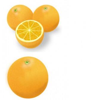果物-オレンジ-みかんイラスト 画像フリー素材 無料素材倶楽部