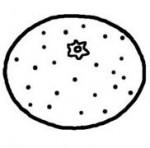 ミカン・みかん(白黒)/果物・野菜の無料イラスト/ミニカット・クリップアート素材