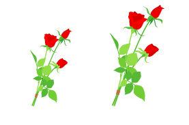 花のイラスト素材 / 赤いバラの花 無料イラスト素材