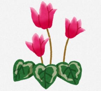 シクラメンのイラスト(花): 無料イラスト かわいいフリー素材集
