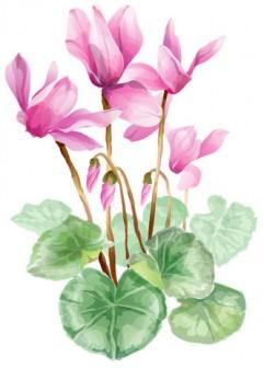 シクラメンのイラスト・画像No.1『シクラメン・水彩画風』/無料のフリー素材集【百花繚乱】