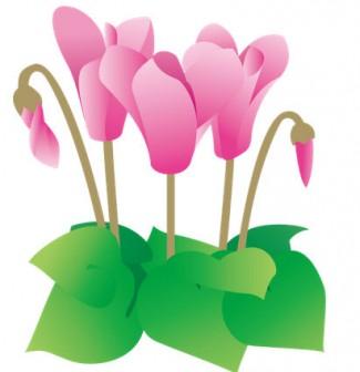 冬の花1-13-シクラメン-花の素材-イラストポップ