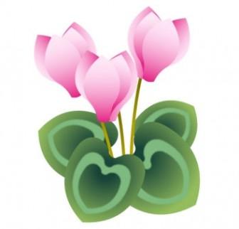 ピンク色のシクラメンのイラスト | イラスト無料・かわいいテンプレート