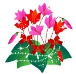 シクラメンの無料イラスト素材 : ブログ素材/イラスト/桜屋