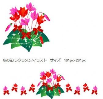 冬の花/シクラメン/無料イラスト素材 - 花/素材/無料/イラスト/素材【花素材mayflower】