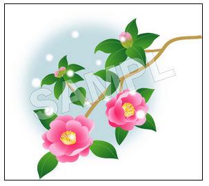 冬の花【山茶花のイラスト】