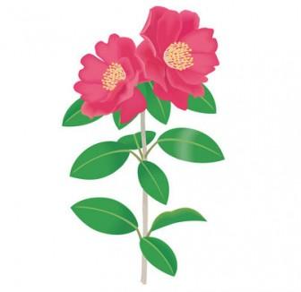 [フリーイラスト] サザンカの花