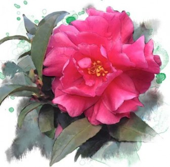 サザンカ イラスト | 花のイラスト フリー素材