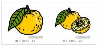 柚子(ゆず)のイラスト