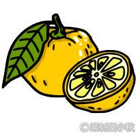 柚子 イラスト