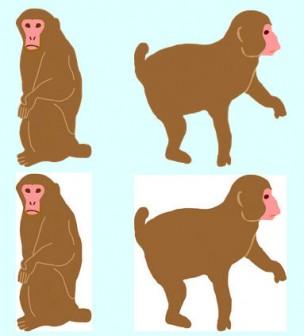 猿、  サル、 イラスト、   無料