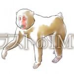 サルのイラスト【無料イラストのIMT】商用OK、CHE3TAH作