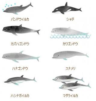 イルカ の 夢 で さようなら 2