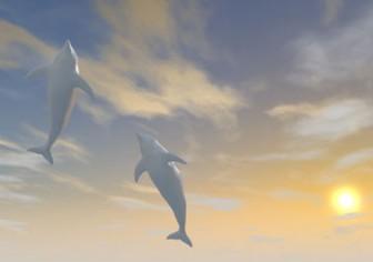夕陽 イルカ ジャンプ - 地球環境 - フリーイラスト素材