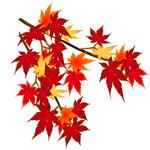 秋の植物・紅葉(もみじ)のイラスト