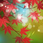 秋の色鮮やかな紅葉(もみじ)背景